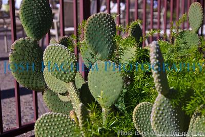 01 01 2009 Sight seeing in Arizona (3)