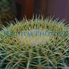 01 01 2009 Sight seeing in Arizona (1)