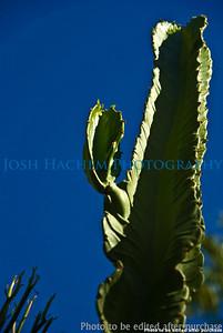 01 01 2009 Sight seeing in Arizona (2)
