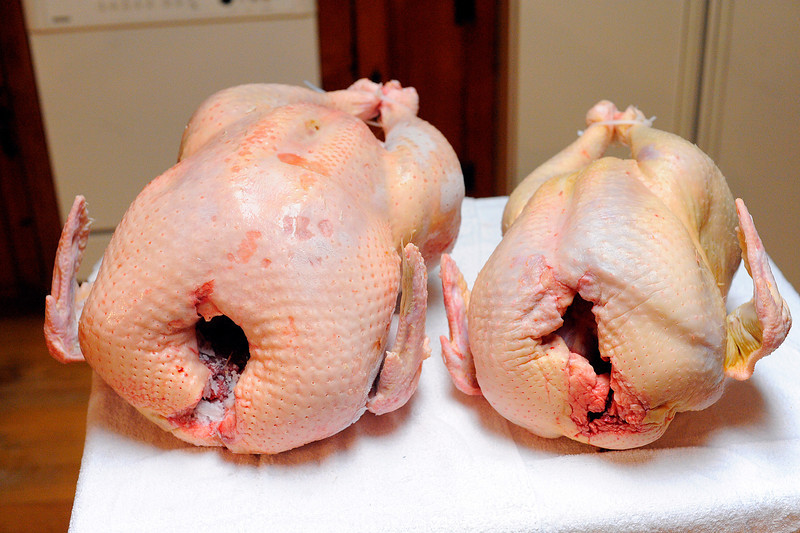 A 45 pound turkey at left and a 25 pound turkey at right that were raised and butchered by Jim Le'Cuyer, 62, of Townsend, Wednesday.<br /> SENTINEL & ENTERPRISE / BRETT CRAWFORD
