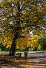Fall in St. Louis. Taken at Lafayette Park in the heart of St. Louis.