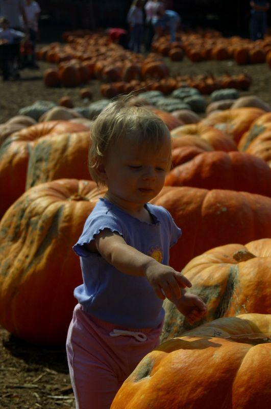 Abbey has found her favorite pumpkin at Burt's Pumpkin Patch (October, 2004)