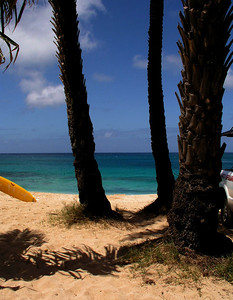 Coconut palm trees on the beach  North Shore, Oahu, Hawaii