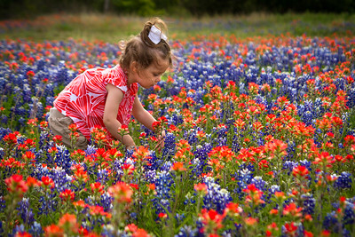 Texas wildflowers in the spring