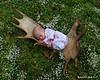 On a moose antler