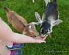 Feeding more goats