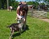 Feeding a friendly goat