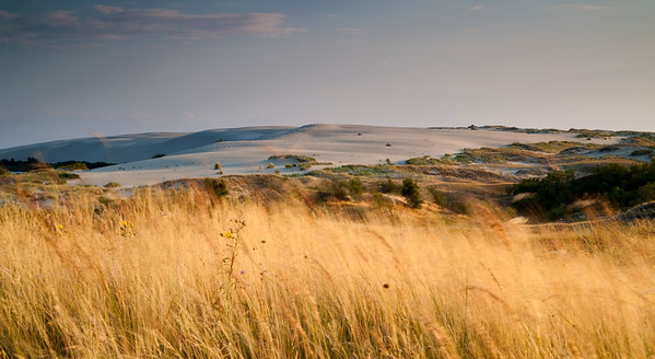 Sand dunes Nida Lithuania. Long exposure used to show movement in grass.