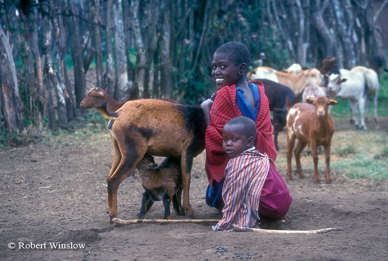 Two Maasai Boys with Mother and Baby Goats inside their Village (called a Boma or Manyatta), Ngorongoro Crater Area, Tanzania, Africa