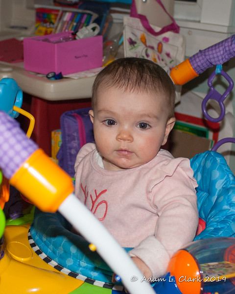 2019.01.16<br> Madison sitting in her bouncy chair