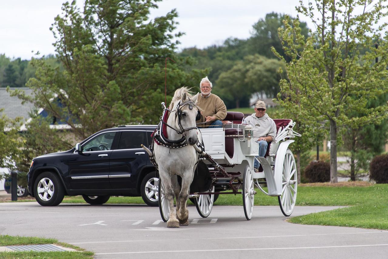 New Horse & Buggy rides in Port Austin - September 2013
