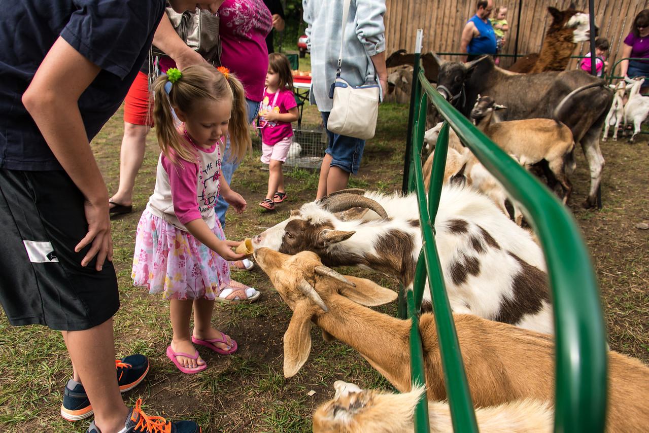 Girl feeding goats an ice-cream cone in Port Austin - September 2013