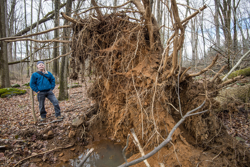 Roots from downed tree, Lake Towhee - April 2013