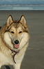 Dog at Beach Aug 06