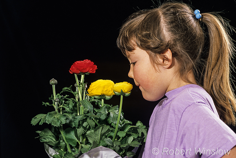 Model Released, 5 year old girl, smelling flowers, smell