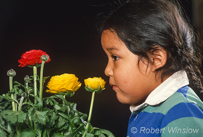 Model Released, 5 year old, boy, Navajo, smelling, flowers