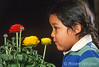 Model Released, 5 year old, boy, Navajo, smelling, flowers