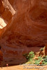 Model Released, Backpacker, Coyote Gulch, Glen Canyon National Recreation Area, Utah