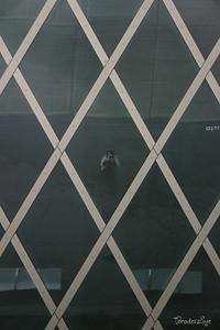 Rem Koolhaas Seattle, 2007
