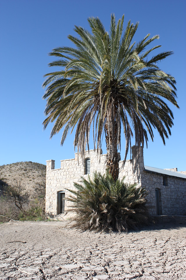 Old building and palm tree near the hot springs, Big Bend National Park