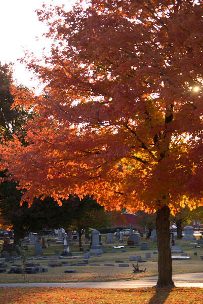 Daniel and I on our fall shoot at Nathaniel Greene Park and Maplewood Cemetery.