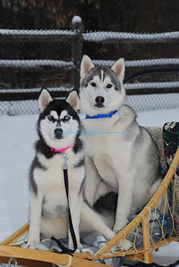 The Huskies ready for a trip.