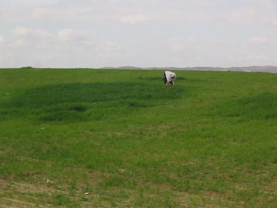 Bedouin woman in Negev field