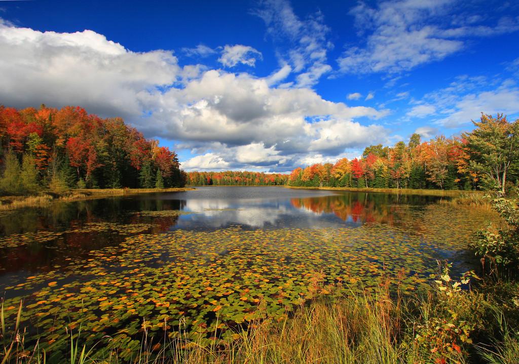 """"""" Beautiful Autumn"""""""