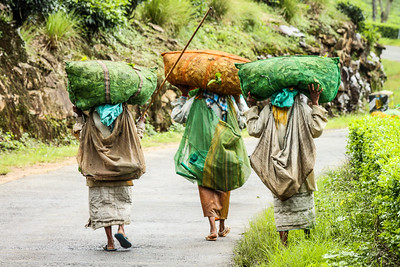 Tea Pickers-5