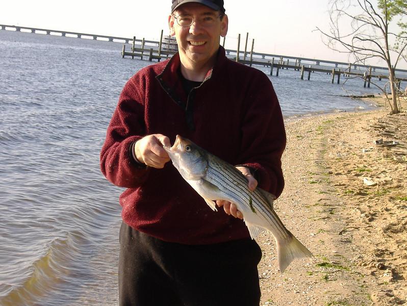 Big D - Potomac Rockfish