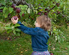 Madison picking an apple on her own
