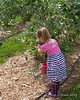 Liliana picking berries and filling her bucket
