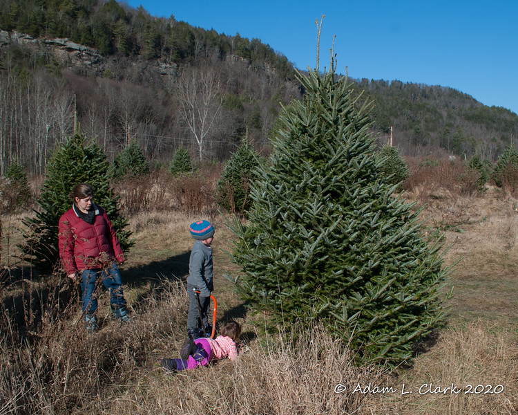 Making the final decision about which tree we are picking.  Madison checks out the underside just to be sure