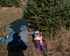 2020.11.29<br> Both of the girls helping daddy cut the tree down