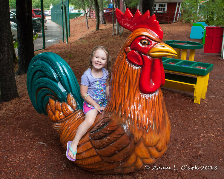 Sitting on a big rooster