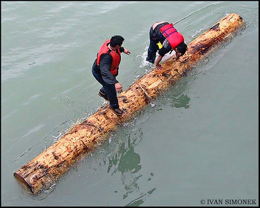 """LOG ROLLING 5"",July4,Wrangell,Alaska,USA."