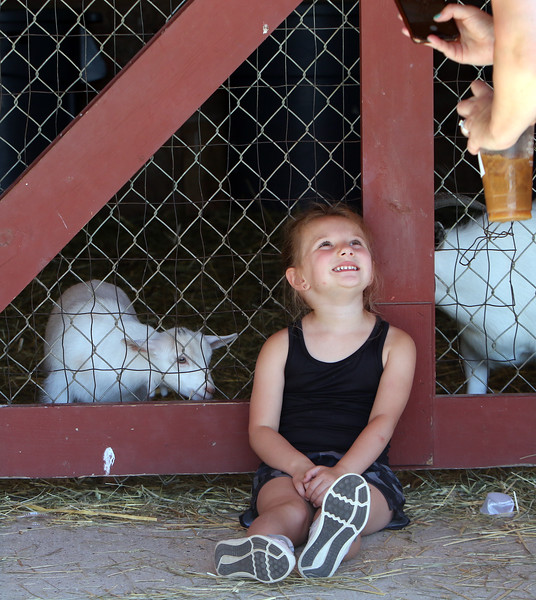 Features at Parlee Farms in Tyngsboro. This is peak blueberry picking season. Penelope Pessotti, 4, of Billerica (sister of Landon in other photo), poses for a photo with a baby goat. (SUN/Julia Malakie)