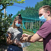 Features at Parlee Farms in Tyngsboro. This is peak blueberry picking season. Timing is earlier than normal because of the heat. Dan Harvey of Andover and his girlfriend Rebecca Craffey of Westford pick blueberries. (SUN/Julia Malakie)