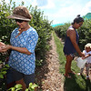 Nubia Ochoa, left, her daughter Andrea Caceres, rear, and granddaughter Diana Caceres, 3, all of Lowell, pick blueberries at Parlee Farms in Tyngsboro. (SUN/Julia Malakie)