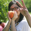 Carmen Leung of Quincy picks peaches with a friend at Parlee Farms in Tyngsboro. (SUN/Julia Malakie)