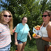 From left, friends Sara Axson, Nicole Cobuccio, and Cassia Burns, all of Tewksbury, pick peaches at Parlee Farms in Tyngsboro. (SUN/Julia Malakie)