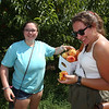 Nicole Cobuccio, left, adds to a full box as she and her friend Cassia Burns pick peaches at Parlee Farms in Tyngsboro. Both are from Tewksbury. (SUN/Julia Malakie)