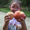 Emily Coca, 8, of Lowell, compares a big peach she'd just found with an average size one while picking peaches with her family at Parlee Farms in Tyngsboro. (SUN/Julia Malakie)