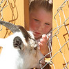 Olivia Greenwood, 4-1/2, of Billerica, gets a closeup look at one of the goats at Parlee Farms in Tyngsboro. (SUN/Julia Malakie)