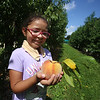 Emily Coca, 8, of Lowell, finds one more big peach to finish up picking their own peaches with her family at Parlee Farms in Tyngsboro. (SUN/Julia Malakie)