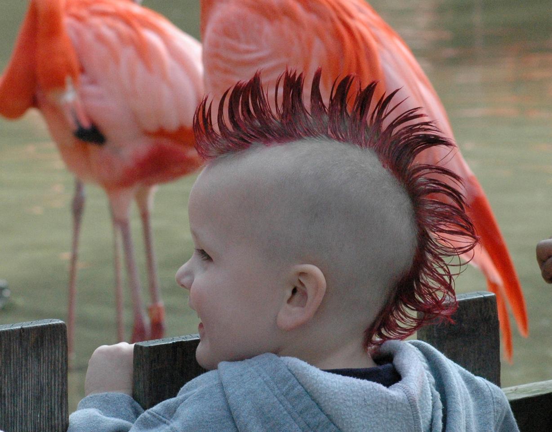 Flamingo Mohawk<br /> Fresno, California