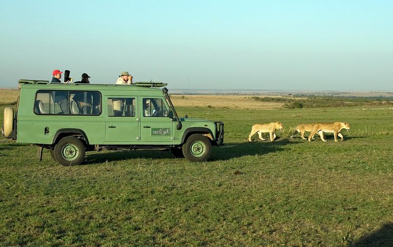 Bill, Mary, Wayne and Lions, Masai Mara