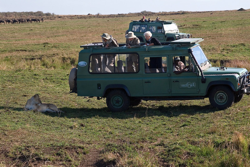 Group watching lion, Masai Mara