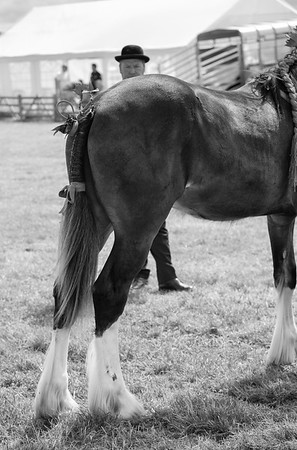 Horse on Show - Tockwith Show North Yorkshire UK 2013