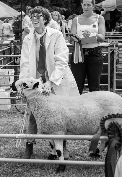 Winner at Sheep Show - North Yorkshire UK 2018